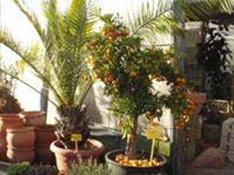 Comprar Árboles frutales