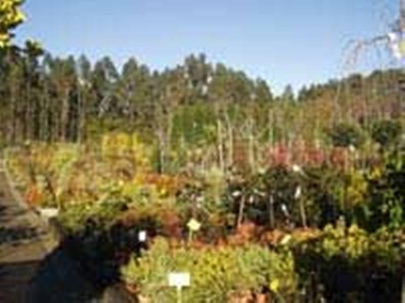 Comprar Arbustos