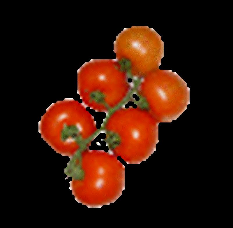 Comprar Tomate rama