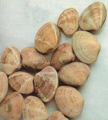 Comprar Almeja Rubia (Venerupis rhomboideus)