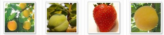 Comprar Pulpa de frutas