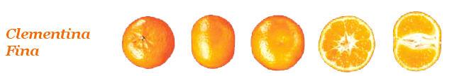Comprar Clementinas