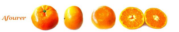 Comprar Mandarina Afourer