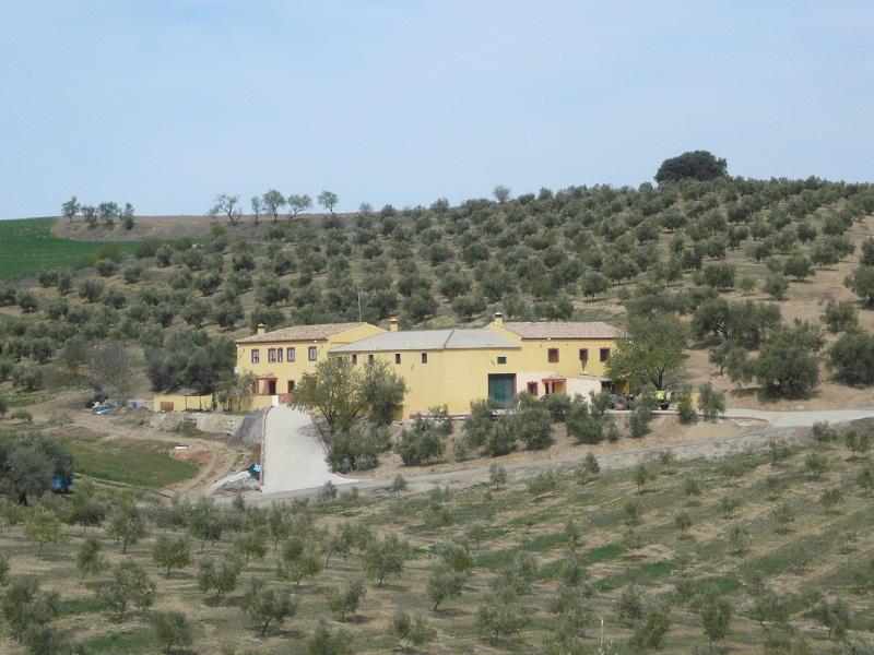 Comprar Finca de olivar cerca de Alhama