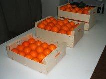 Comprar Oranges navel