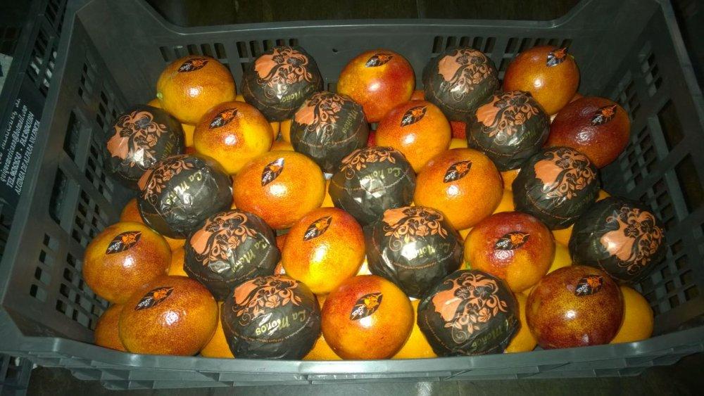 Comprar Pomarańcz