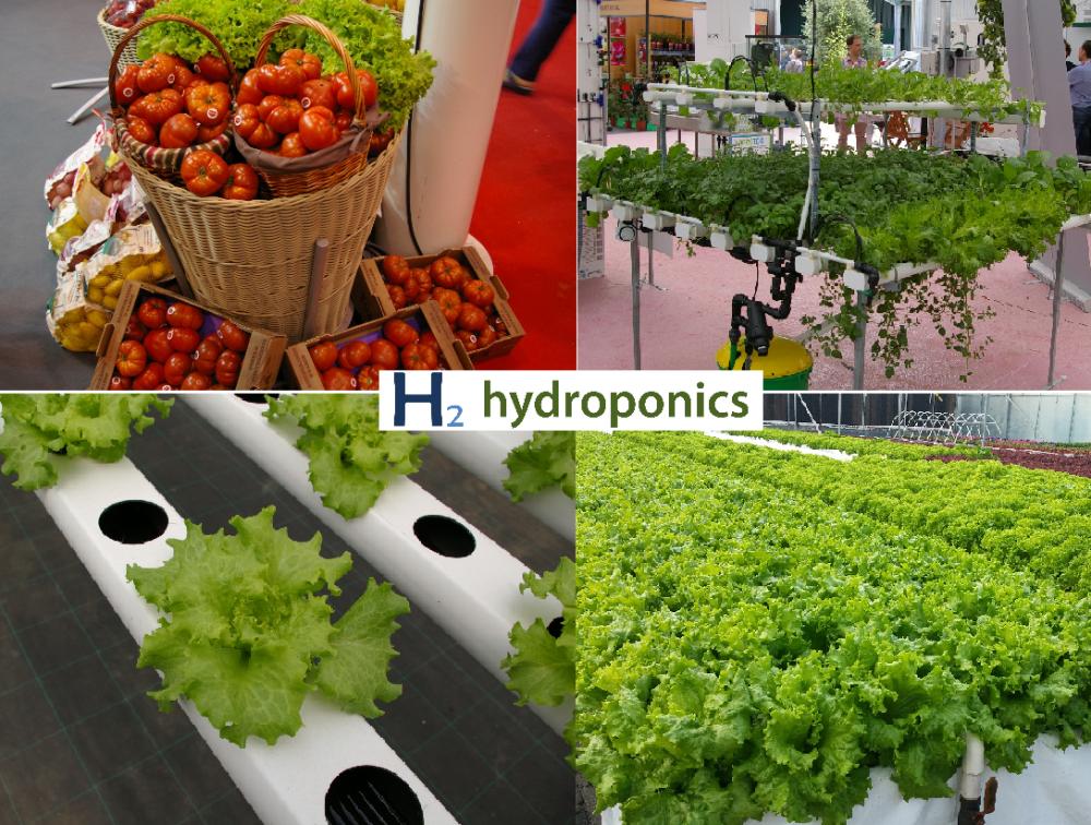 Comprar Cultivos hidroponicos