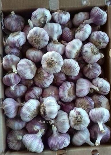 Comprar Fresh garlic