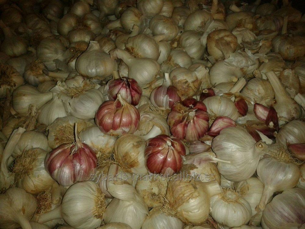 Comprar Ajo, garlic