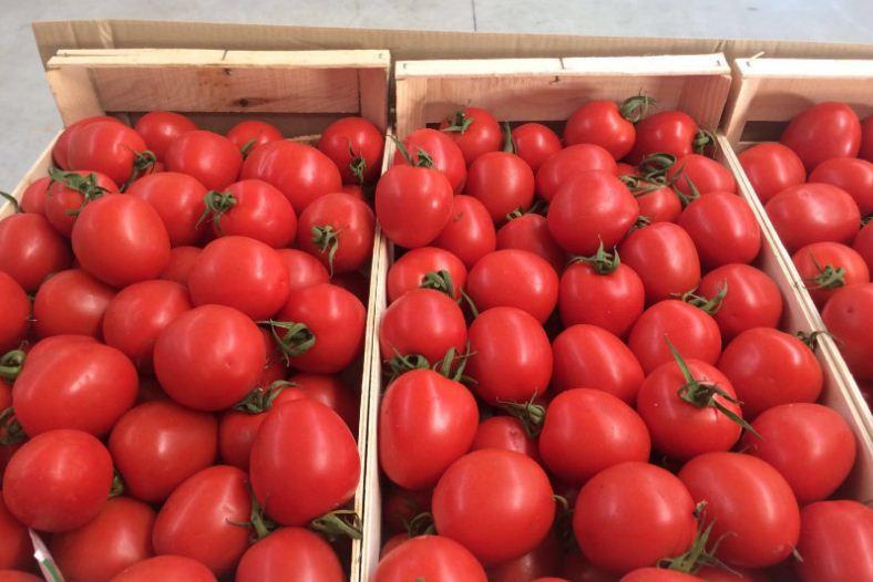 Comprar Los tomates españoles más alta calidad