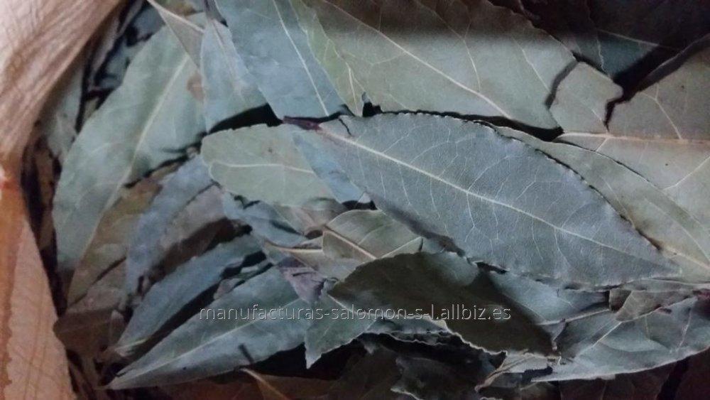 Comprar Laurel hojas