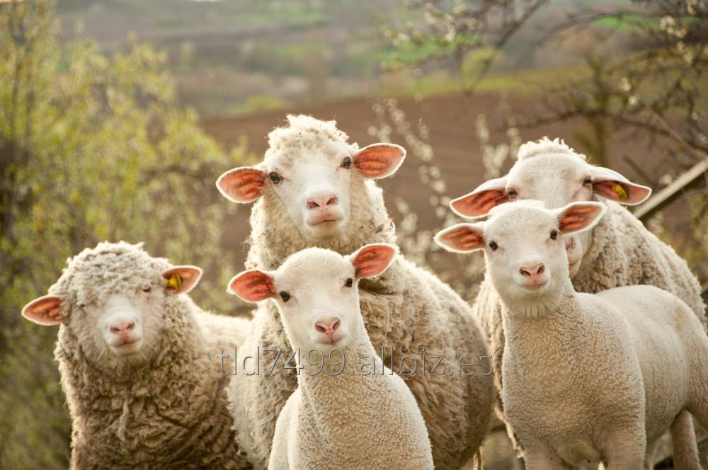 Comprar Pienso para ovejas