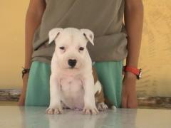 Аликанте недвижимость недорого щенка
