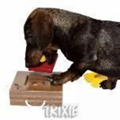 Dog activity caja de juegos