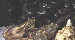 Ostrón