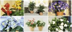 Plantadores decorativas