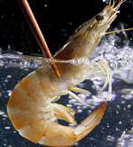 Animales marinos, crustáceos