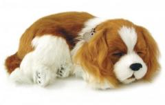 Peluche Cavalier King Charles Perfect Petzzz
