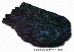 Carbónes