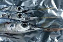 דגים מחטיים
