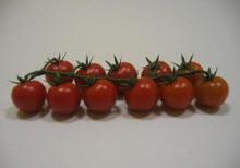 Cherry Rama