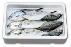 Pescado Palometa blanca