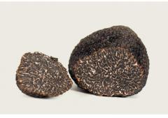 Trufa perigord / tuber melanosporum