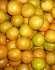 Mandarinas (Granel 0,5 Kg.)