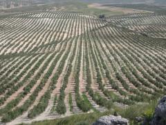 Finca de olivar en Jaén