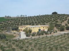 Finca de olivar cerca de Alhama