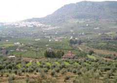 Finca de olivar en Málaga