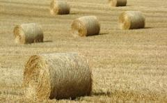 Haylage