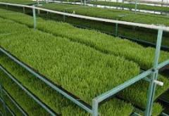 Зеленый фураж
