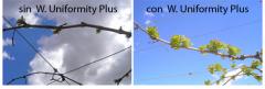 W. UNIFORMITY PLUS (Superplus)