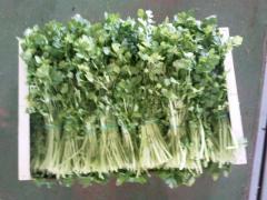 Кинза зелень, кориандр