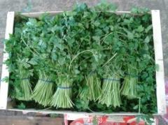 Продаем зелень