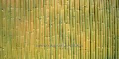 Panel Bambú