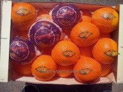 Naranjas al por mayor en España