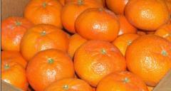 Mandarina Nadorcott 10 Kg