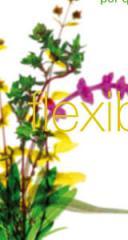 Extractos Vegetales y Productos Fitoquímicos