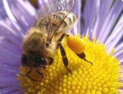 Miel de todo tipo de flores