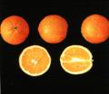 Naranja Newhall