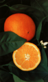 Naranja Washington Navel