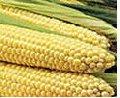 Maíz, Comercialización de Cereales