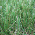 Césped Perfectgrass Paraiso