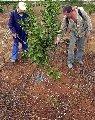 Herbicidas, Asheto