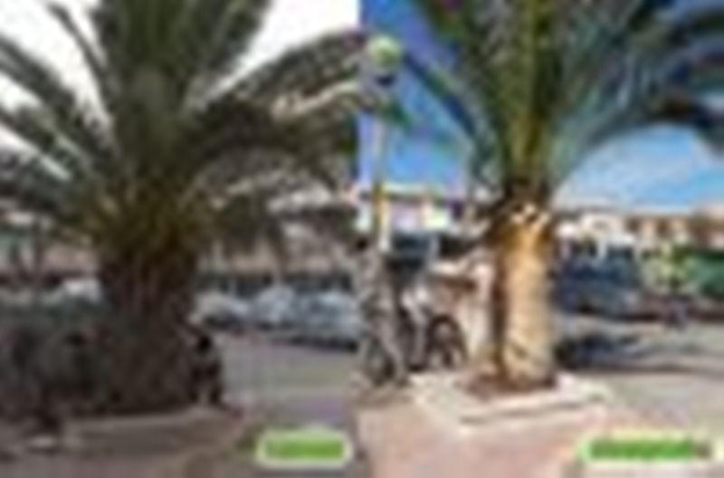 Pedido Poda de pinos y palmeras