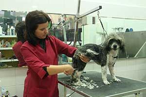 Pedido Servicios de Peluquería canina