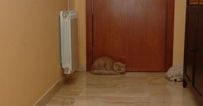 Pedido Servicios de calefacción
