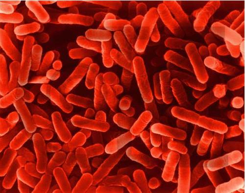 Pedido Control de Legionella